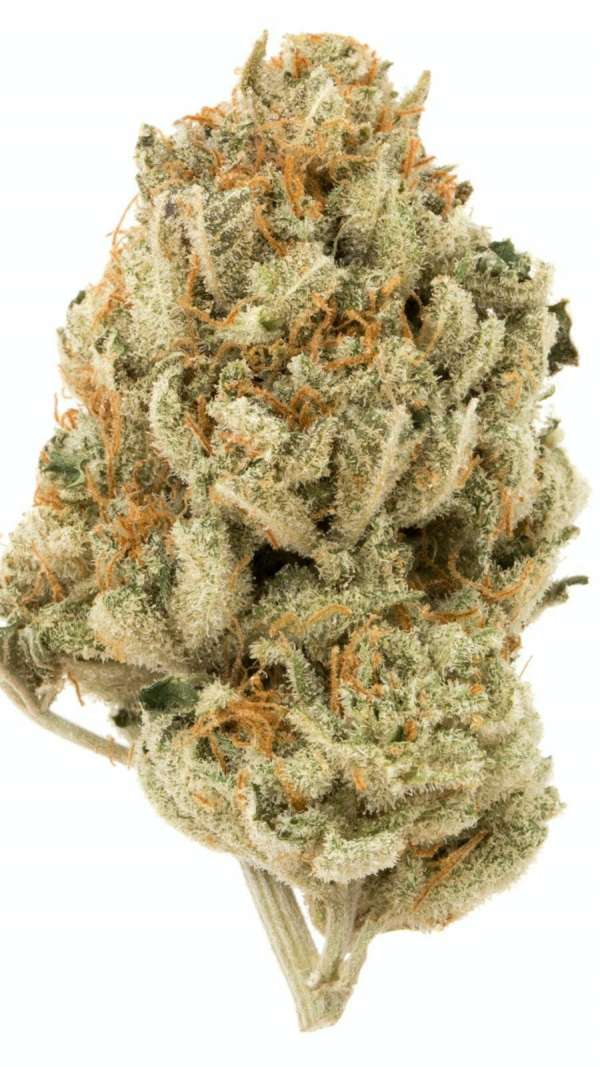 serene farms online dispensary cinderella 99